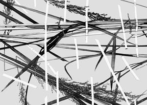 Выставка «Засушенному – верить» в Музее архитектуры им. А.В. Щусева