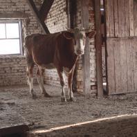 Выставка Марины Фоменко «Бремя молока»